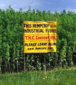 hemp crops help farmers make more money