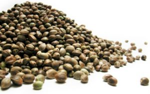 Hemp seeds