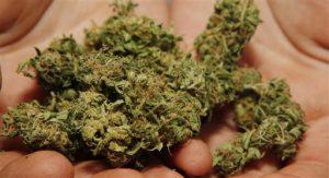 Boulder County Marijuana