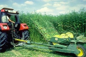 Hemp farming would create jobs for California