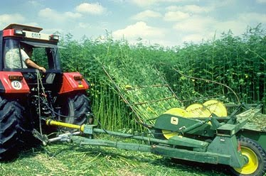 California: Hemp farming in California closer to reality with SB 676