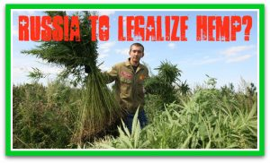 Russia to legalize hemp