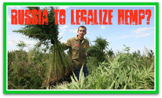 Russia to Possibly Legalize Hemp!