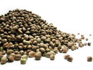 Hemp seeds: Hemp food is healthy
