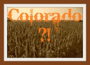 Colorado-Industrial hemp