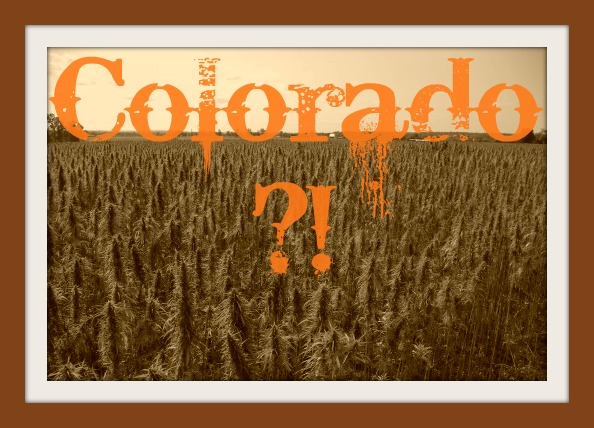 Colorado Industrial Hemp