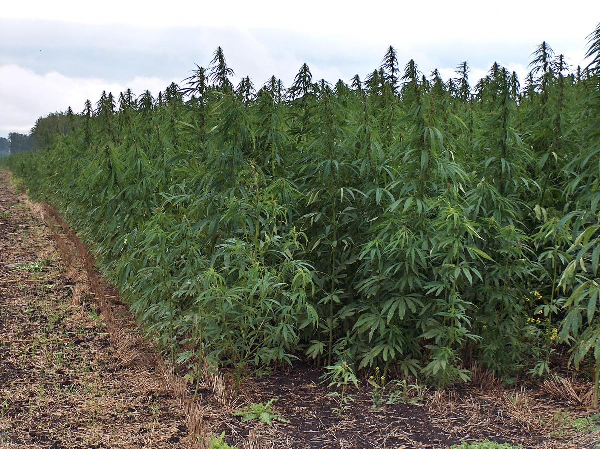 Kentucky: Hemp Laws are Inching Forward