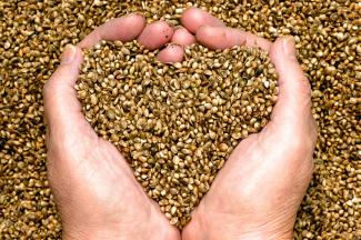 Agricultural Hemp Foods Improve Quality of Life