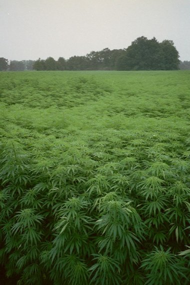 Industrial Hemp Bill Hits Rocks in Kentucky