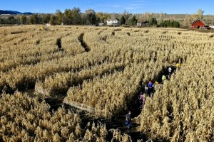 Colorado falls bring kids to farms