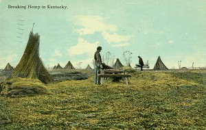 Kentucky Hemp Farming History and Future