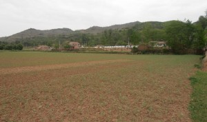 Hemp Inc's hemp fields in China