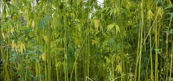 Oregon: Industrial hemp fields just waiting on the rules