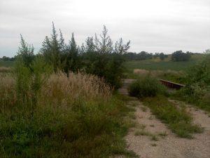 Wild Nebraska industrial hemp - Photo byDiana Sunshine Wulf