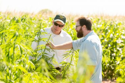 CSU industrial hemp research