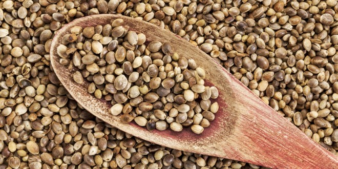 Hemp Seeds for health