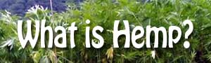 What_is_hemp