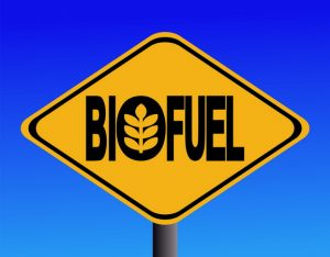 Hemp biodiesel