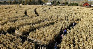 Colorado falls bring kids to farms