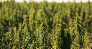 Richard Rose, Hemp Pioneer, Sounds Off On The Farm Bill