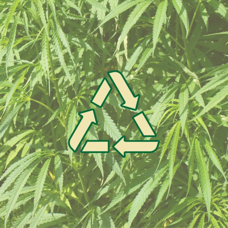 Hanf Nachhaltigkeit